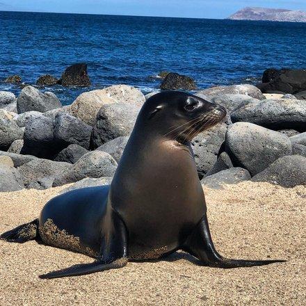 Galapagos Wildlife Adventures