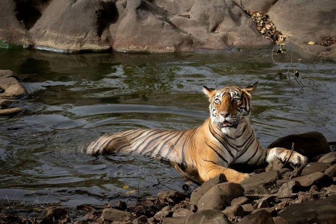 Wildlife & Nature Photography Tours