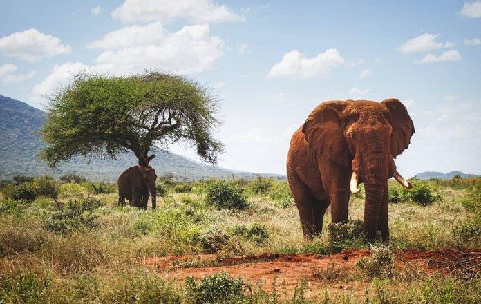 Safari Wildlife Adventures