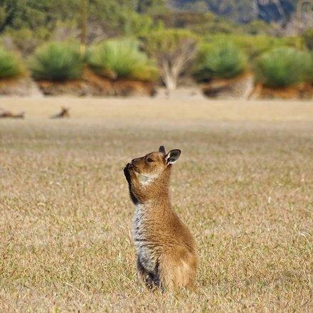 Australian Safari Tours