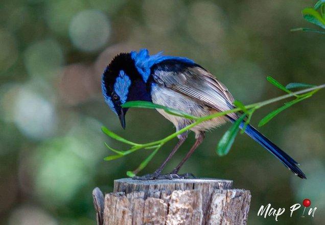 Bird Photography Tours