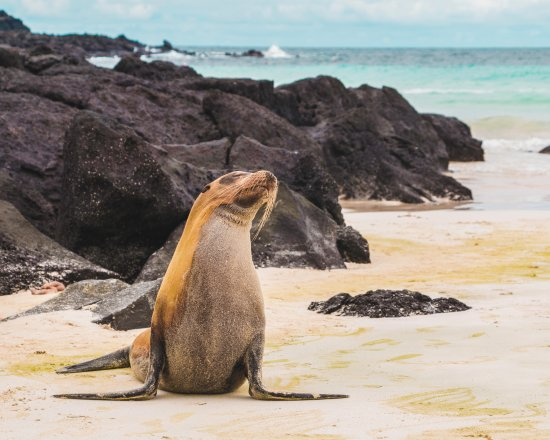 Snorkelling with Sealions in The Galapagos Islands Tours