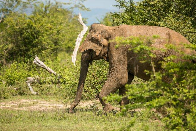 Sri Lanka Safari Tours