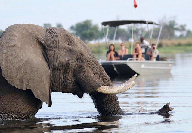 Luxury Safari Tours