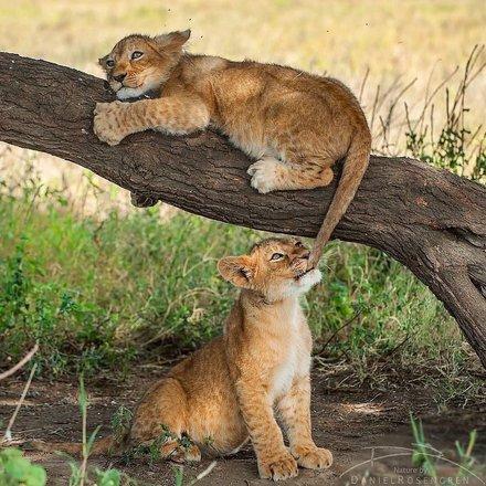 The Big Five Safari Tours
