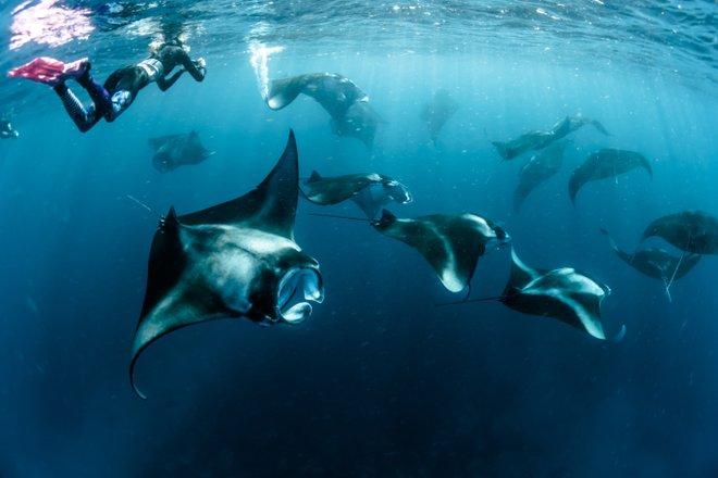 Diving With Mantas In The Maldives Tours