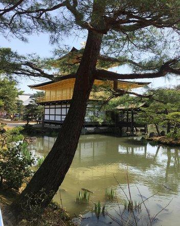 Kinkaku-ji (golden pavilion) Tours