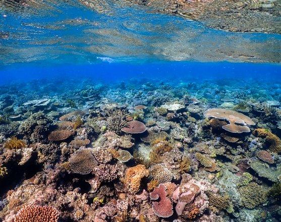 Scuba Diving & Snorkelling Tours