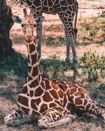 Safari Camping Tours