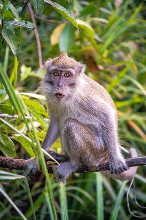 Borneo Safari Tours