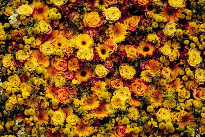 Chelsea Flower Show Tours