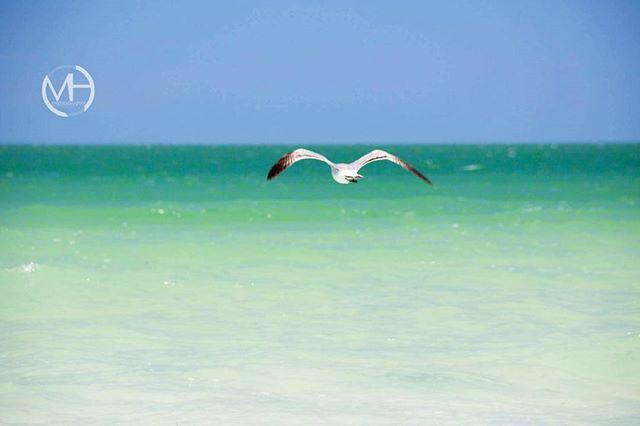 Never look back keep flying into the blue.. . . . . #Cleargram #IgersStPete #UnlockTampaBay #LoveFL #instagram_florida #RoamFlorida #NatureLovers #NatureOnly #Nature_Lovers #NaturePhotography #NatureWalk #NatureLove #NatureShots #ig_captures_nature #Mini_Escapes #LoveFL #Instagood #TravelPhotography #Weekly_Feature #TravelPhotos #TravelShots #RoamFlorida #PureFlorida #FLstofmind #Explorida #Florida_GreatShots #LuckyWeLiveInFL #FloridaLife #IG_Great_Shots_ #UpsideFlorida #Fun_In_Florida