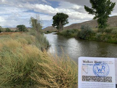 Walker River: ✅. 11/22 @NVStateParks in the books. This is Nevada's newest state park and all I can say is wow. It is stunningly beautiful! @TravelNevada #SteveInParks #BattleBorn #NVLeg #HomeMeanaNevada https://t.co/CcjwA6uwu8