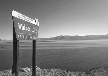 """""""Roadside View"""" Walker Lake is along Highway 95 between Hawthorne and Reno NV. This is from our Nevada Road Trip series in October 2018. We'll share more from our series soon. - Cheers! David """"You don't take a photograph, you make it."""" – Ansel Adams  #hollywood #publishedphotographer #published #goodyearazphotographer #travel #travelphotography #travelblogger #travelphotoblog #travelphotos #noir #gettyimages #retro #roadsideamerica #americana #blackandwhitephotography #blackandwhite #blackandwhitephoto #bw #bw_lover #bw_captures #bw_addiction #bw_society #monochrome #monochromatic #monochromephotography  #abandonednevada #coolasshit #myworldthroughlens #nevadaphotographer"""