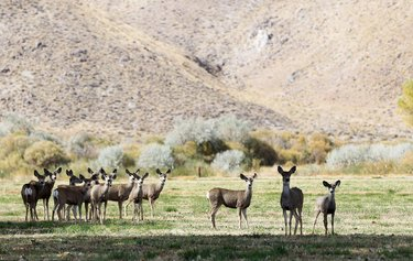 #MondayMotivation The views are amazing, but be careful ... you might run into a few inhabitants when you visit Pitchfork Ranch, in the Walker River state recreation area near Yerington. Pitchfork Ranch is open to camping, hiking, biking, wildlife viewing, kayaking, fishing, or simply relaxing in the great outdoors. (📷: nvstateparks) #explore #discovernevada #nevadasilvertrails #nst #greatoutdoors