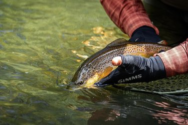 Making sure that fish swim away on their own volition is crucial for the health of our beloved trout. Trout who linger in your hands may not be ready to face the current and can die if pushed into the water. Always point fish up stream and wait for them to swim away.  #truckeeriver #flyfishing #flyfishingjunkie #fishing #onthefly #esn #euronymphing #trout #rainbowtrout #browntrout #nymphing #troutfishing #palmmeat #renoflyshop  #catchandrelease #fishinglife  #nature #flyfish #trophytrout #flyfishing #troutflies #flyfishingaddict #onthefly #renotahoe #palmmeat #nevada #nevadaflyfishing #guidedflyfishing  #nevadaoutdoors #gripngrin #tightlinenymphing #barbless