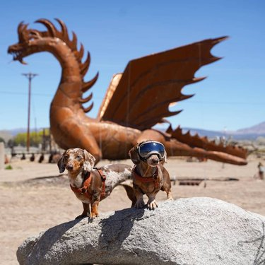 It was just a metal dragon. Or was it? These are the kind of travel experiences I live for. @carsonvalleynevada #ad #CarsonValley . Our first stop on our hosted Carson Valley trip was meeting with someone from the visitors association for dinner. He mentioned a metal dragon sculpture on the edge of town. Several times. I could tell it was important to him. . So @longhaultrekkers and I went to see it before we left Gardnerville. We were