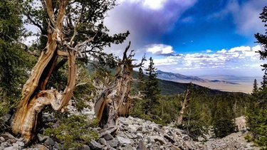 The oldest living organisms on Earth lying patiently in the shadow of Wheeler Peak and the glacier. These freakin trees are older than Jesus guys. Also the trail through this forest was full of so many loose rocks I swear I nearly twisted my ankles a dozen times. Be safe out in the middle of nowhere guys. I also love this first photo because you can see the Great Basin desert stretch off into the distance at roughly ~6,000ft less elevation in a dozen miles.  #GreatBasinNationalPark #GreatBasinGroovin #TravelNevada #BristleconePine #MtWheeler