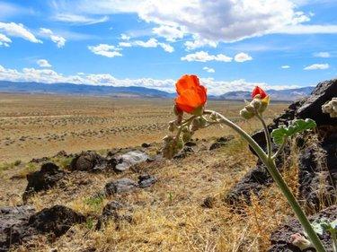 #Nevada #HomeMeansNevada #TravelNevada #Fernley #Ferntucky #Desert #WayOutPastTheDryLakeBeds #DontFenceMeIn #DFMI  #WildFlowers #HornyToads #Mandelorian #SandDunes #SunburnSaturday #naturephotography #nature #naturelovers #natureza #canon #travelnevada #canonphotography #Canonphoto #Outdoors #Gooutsise #Explore #CheckTheRocks #lovemylife #beautiful