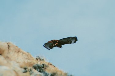 I climbed a mountain today. I waited with my camera and out of no where I saw the most beautiful hawk and I was able to get a few pictures of it. #hawk #nature #natgeo #photography #flight