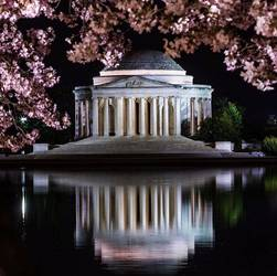 Cherry Blossoms 🌸