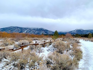 Nature walk straight to the lake 🌬❄️⛄️  • • • This 2 mile out & back trail leads you straight to a small cove of the South Lake Tahoe shore. Cove East is a California Tahoe Conservancy restoration project. You can admire the land but staying on the trail and respecting the access permitted guidelines. The trail is dog friendly and lightly trafficked with joggers and sightseers.   On this trail to the lake you might see a variety of wildlife such as: bald eagles, beavers, tree swallows, Pacific tree frogs, etc. With gorgeous views of the mountains and the lake it's one of my favorite nature walks!   #southlaketahoe #tahoetrail #eastcove #lake #mountains #naturewalk #wildlife #lakelife #snowtrails #snow #restorationproject #keeptahoeblue #dogtrail #icy #southlaketahoecalifornia #southlake