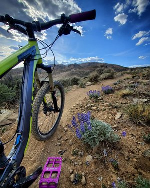 Purps all over the trail!!! #mountainbiking #desertrat #springtime #girlsjustwannahavefun giantbicycles #howtonevada #dfmi #idbikethat #renotrails