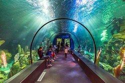 Moody Gardens Rainforest And Aquarium Garden Ftempo