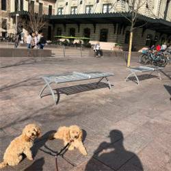 """Just chilling and people watching!"" - R&P#rafahoang #pennylainehoang #htxpoodles #dogs #denver #unionstation #colorado #chill"