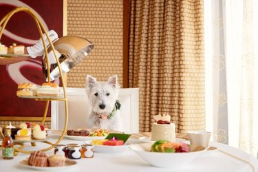 """In Vegas, Fido can """"sit"""" (at the table) and """"stay"""" (in your luxury room) with @wynnlasvegas new dog-friendly room program! 🐶 #PetAppreciationWeek"""