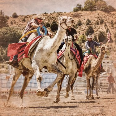 Camel Race Weekend! #virginiacity  #onlyinvc  #camelraces  #camels  #travelnevada  #dontfencemein
