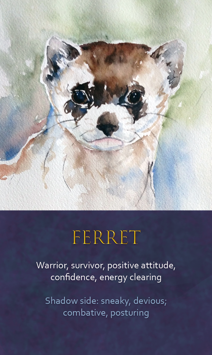 22-Spirit-Animal-Oracle-Card-Ferret.png