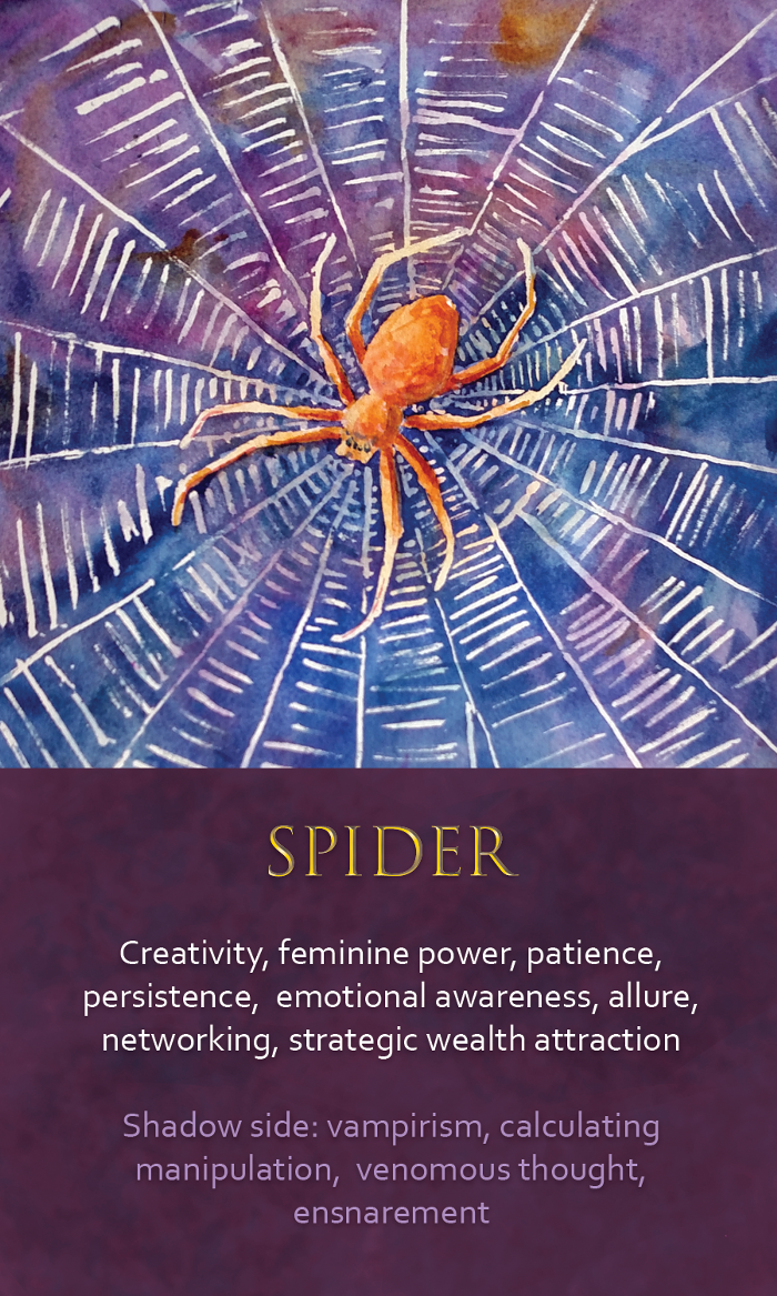 26-Spirit-Animal-Oracle-Card-Spider.png