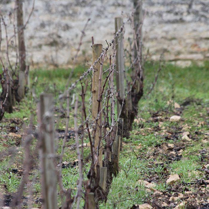photo of vineyard