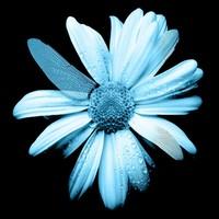 Fringe tv flowers 572653 1920x1080 %282015 08 29 19 37 54 utc%29 %282015 08 30 08 27 06 utc%29