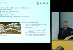 Mathematical Modeling of Spinal CSF Dynamics: Human and Animal Syringomyelia