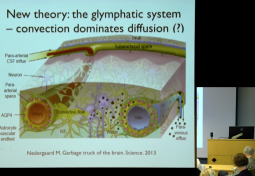 Simulating the Fluid Flow of the Glymphatic System: Extracellular Fluid Flow