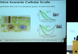 Bioengineering Perspective on the Human Brain Cellular Structure