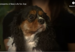 A New Life for Zoe