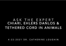 Ask the Expert: Chiari, Ehlers Danlos syndrome and Tethered Cord in Animals