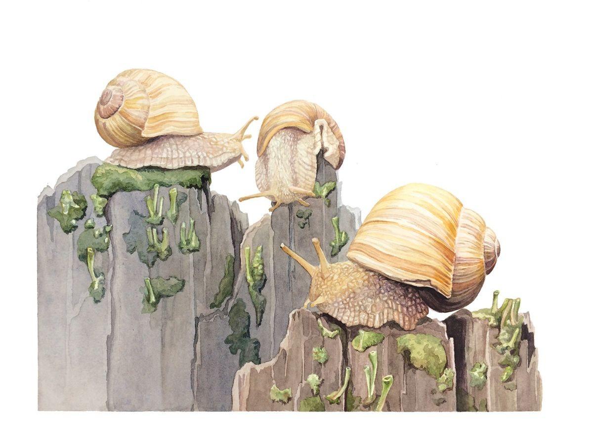Snails by Lindsey Kernodle