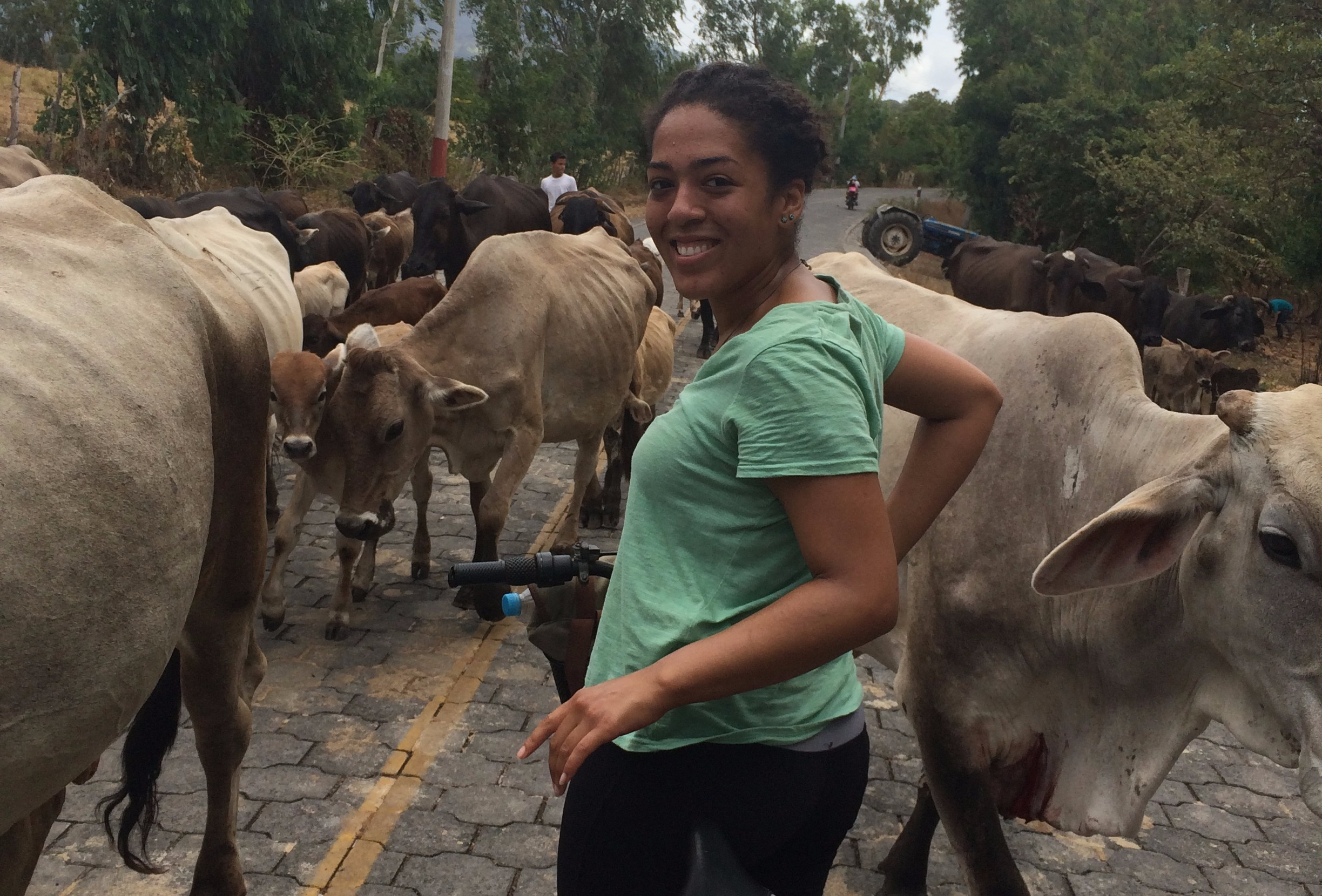 Student on bike in herd of cattle