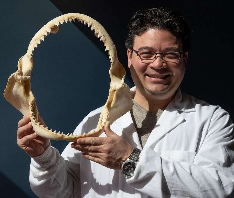 SNS assistant professor Nathaniel Jue holds the jaw of a great white shark.