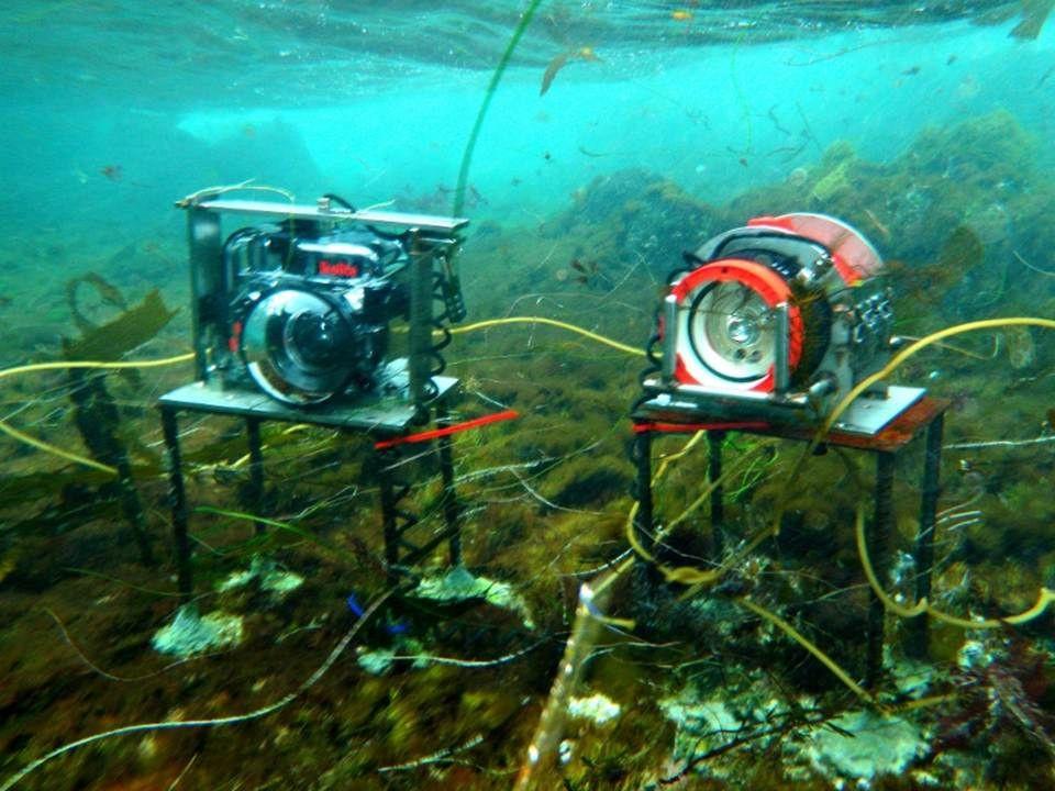 Ikelite underwater camera housing and strobe deployed at Santa Catalina Island.