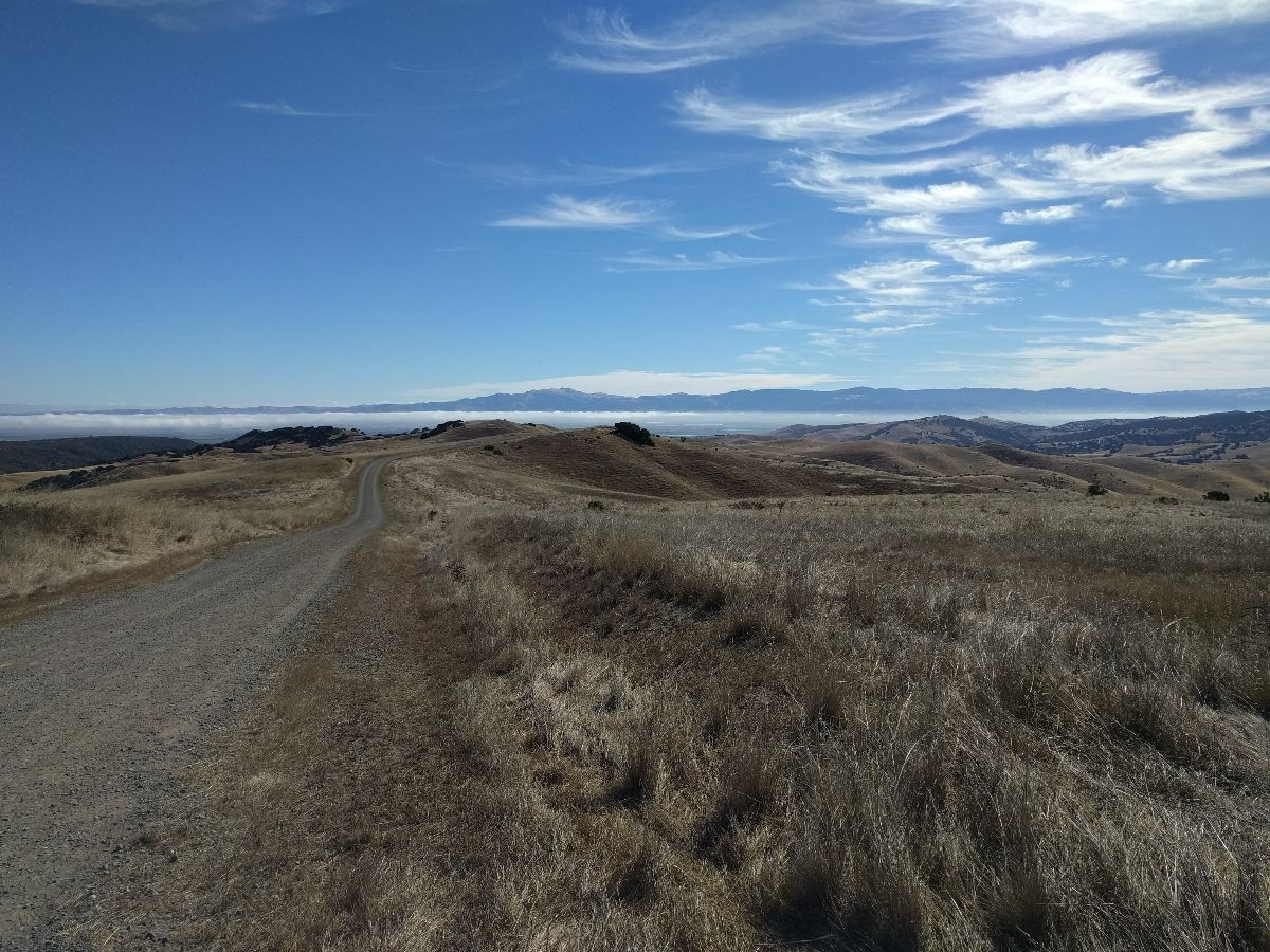 A road through native habitats on the Fort Ord National Monument