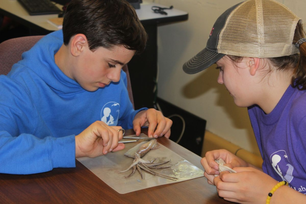 Students dissecting a squid