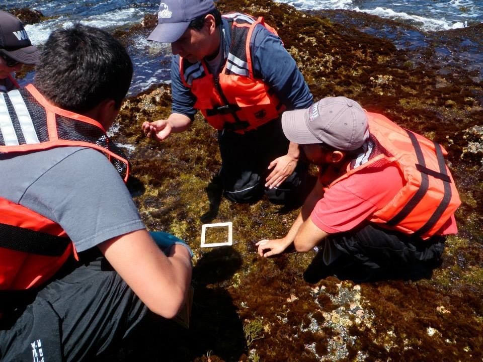 Students working in the intertidal