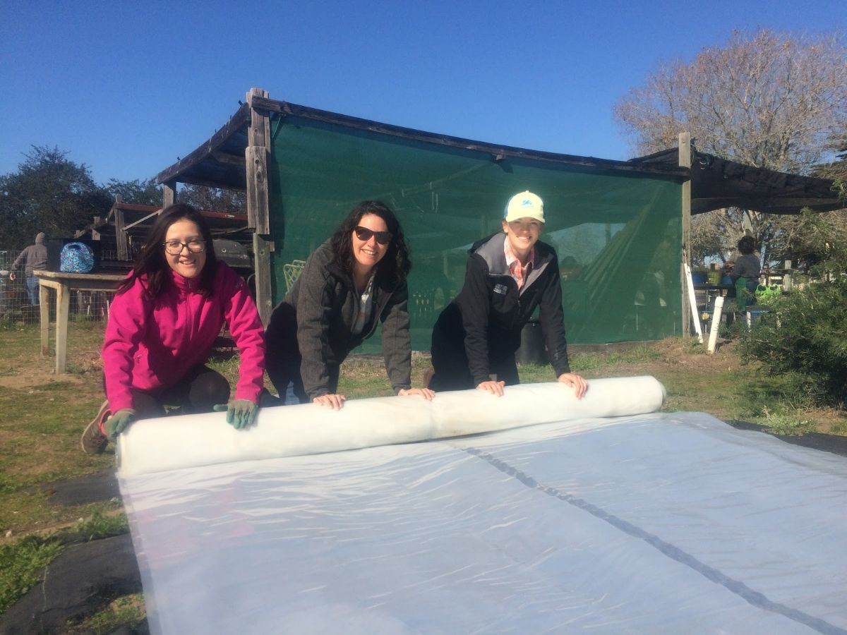 The lab rolling up plastic sheeting outside in the sun.