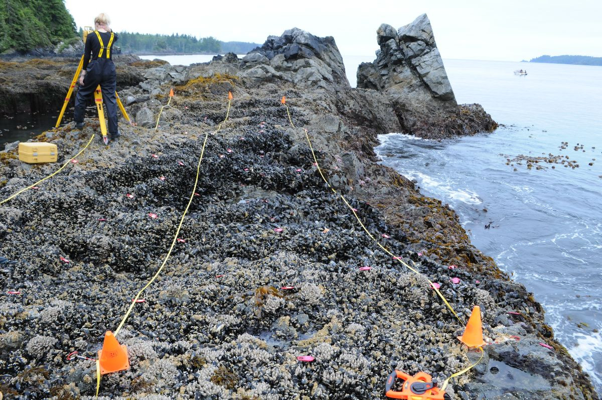 British Columbia intertidal.