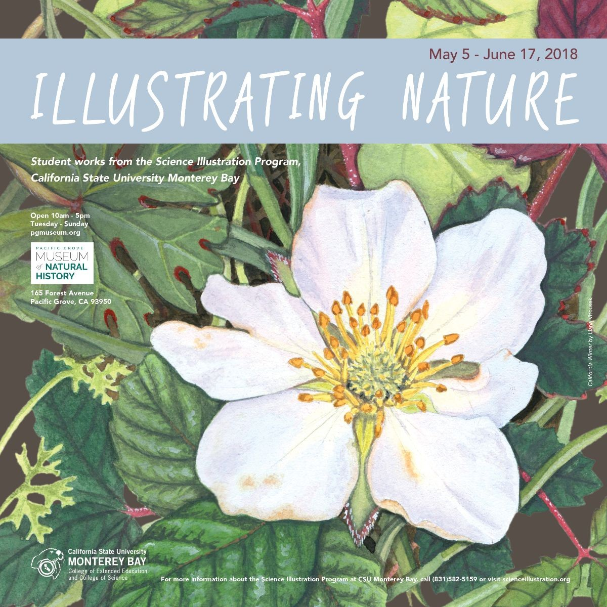 Illustrating Nature - CSUMB Science Illustration
